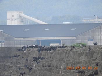Takeshima363.JPG