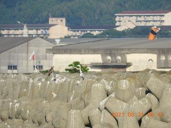 Takeshima366.JPG