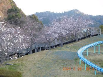 Toyooka256.JPG